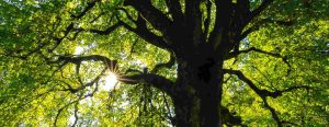 Tree Care Services Coventry