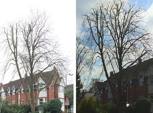Tree thinning Coventry