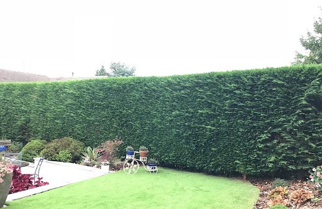 hedge trimming in earlsdon