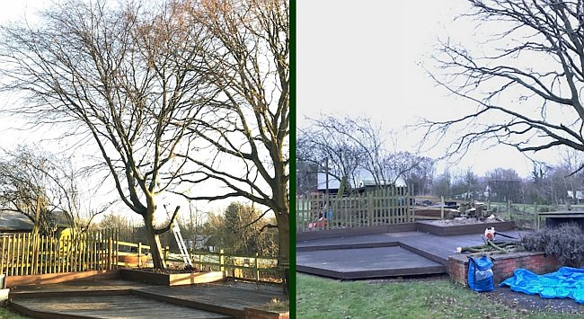 tree removal coventry