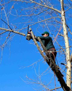 tree care coventry